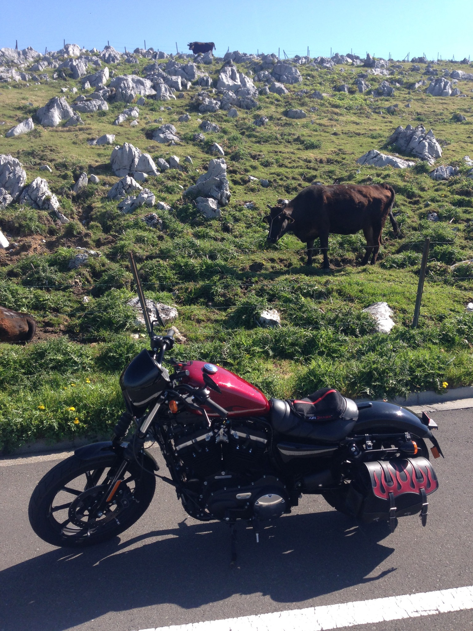 牛さんと愛車の写真