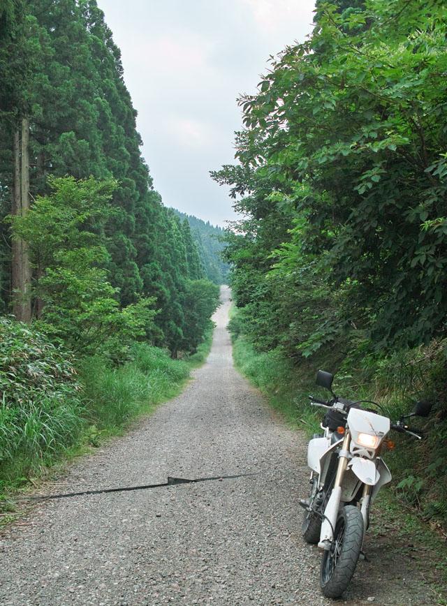 瀞川氷ノ山林道のロングストレート