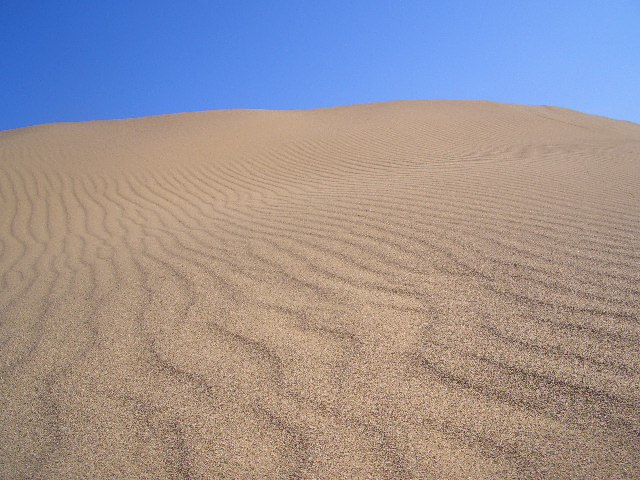 鳥取砂丘。朝は美しい風紋が見られます